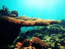 surga bawah laut